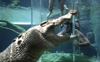 The Cage of Death (Australia)